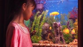 Aquarium und Kind stock video
