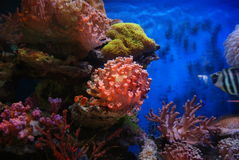 The aquarium of the undersea landscape Stock Photography