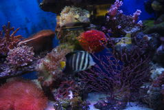 The aquarium of the undersea landscape Stock Photo