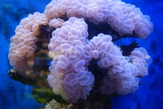 The aquarium of the undersea landscape. Aquarium underwater scenery, is artificial, but very true beauty Stock Images