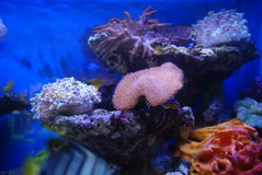 The aquarium of the undersea landscape Royalty Free Stock Photo