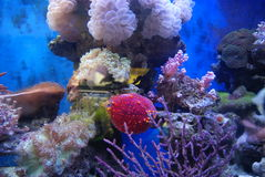 The aquarium of the undersea landscape Royalty Free Stock Photos