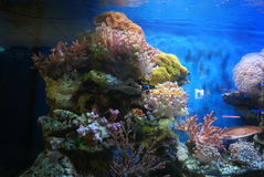 The aquarium of the undersea landscape Stock Images