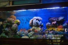 The aquarium of the undersea landscape Royalty Free Stock Image