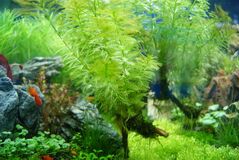 The aquarium of the undersea landscape Stock Photography