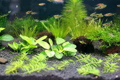 Aquarium underwater garden. Stock Photos
