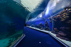 Aquarium underwater observatory Royalty Free Stock Photo