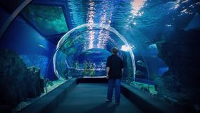 Aquarium Underwater Tunnel With Man Walking Through. Visitor walks under the water with many fish swimming around in an aquarium stock video