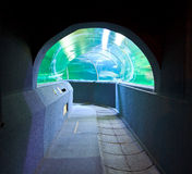Aquarium Underwater Tunnel Stock Images