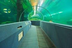 Aquarium Underwater Tunnel. Various fishes at Aquarium Underwater Tunnel for travel and education stock image