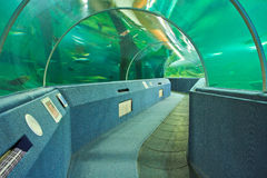 Aquarium Underwater Tunnel. Various fishes at Aquarium Underwater Tunnel for travel and education royalty free stock photography