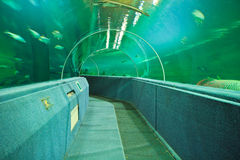 Aquarium Underwater Tunnel. Various fishes at Aquarium Underwater Tunnel for travel and education royalty free stock image