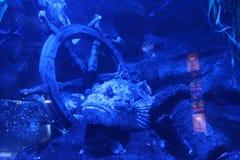 Aquarium Underwater fish stock images