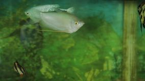 Aquarium with a variety of fish.  stock footage