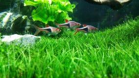 Aquarium vert Photographie stock libre de droits