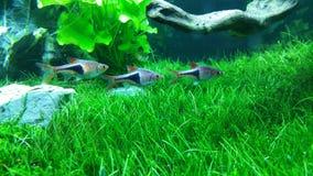 Aquarium vert Images libres de droits