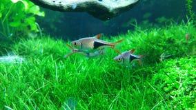 Aquarium vert Photos libres de droits