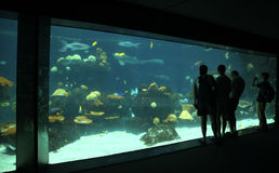 Aquarium Viewers. People viewing aquarium royalty free stock photography