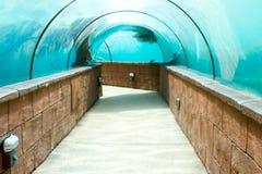 Aquarium viewing gallery Royalty Free Stock Image
