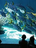 Aquarium Visit. Two children watch fish in an aquarium Royalty Free Stock Photography