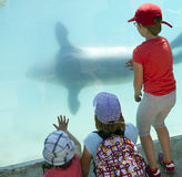 Aquarium Visit Royalty Free Stock Image