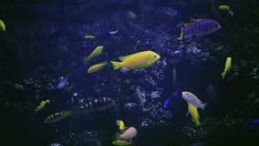 Aquarium, Vissentank, Coral Reef, Dieren, Aard stock video