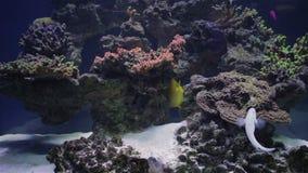 Aquarium, Vissentank, Coral Reef, Dieren, Aard stock videobeelden
