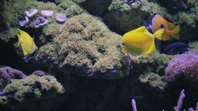 Aquarium, Vissentank, Coral Reef, Dieren, Aard stock footage