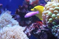 Aquarium voor speciale dag stock afbeeldingen