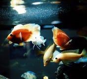 Fishes aquarium water multicolors light Stock Image