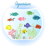 Aquarium with watercolor fish and algae. Vector illustration of fish tank Stock Images