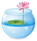 An aquarium with a waterlily and a flower Stock Image