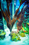 Aquarium with weed; Royalty Free Stock Images