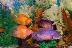 Aquarium world Stock Image