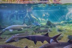 Aquarium in a zoo Stock Image