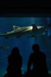 Aquariumdatum mit Haifisch Stockbilder