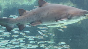 Aquariumfischanzeige Lizenzfreie Stockfotografie