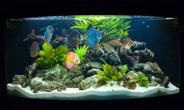 Aquariumfische Stockbilder