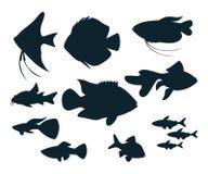 Aquariumfischschattenbilder Stockfoto