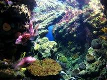 Aquariumleben stockbilder