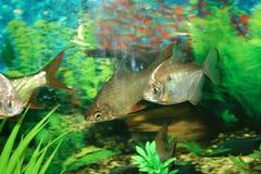 Aquariums Royalty Free Stock Image