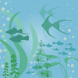 Aquariums background with fish. Vector illustrations of aquarium background with fish and algae Stock Photos