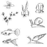 Aquariums image set. Vector illustrations of sketch image of aquariums animal and plants Royalty Free Stock Photo