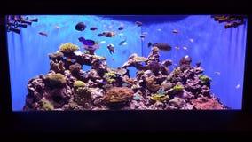 Aquariumscène Stock Afbeelding