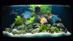 Aquariumvissen Stock Foto's