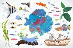 Aquariumvissen, vectorillustratie van het zeewier de onderwater naadloze patroon Royalty-vrije Stock Afbeeldingen