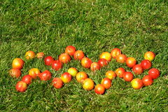 Aquarius. January 20-February 18,zodiac sign,made of plums on grass,see series Stock Images