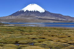 Aquas Caliente, Volcano Sajma, Bolivia. Laguna Sajama is a lake in the Oruro Department, Bolivia. Its surface area is 0.3 km². Also the view present the royalty free stock photo
