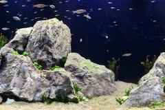 Aquascape Fotografie Stock Libere da Diritti