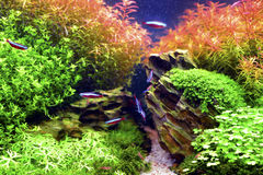 Aquascape royaltyfri bild